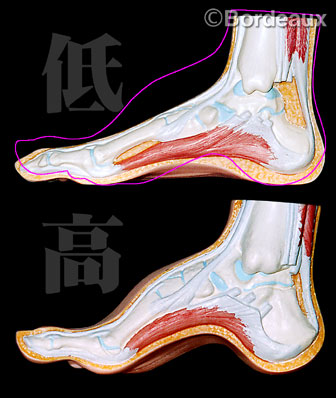 「足の甲高」の画像検索結果